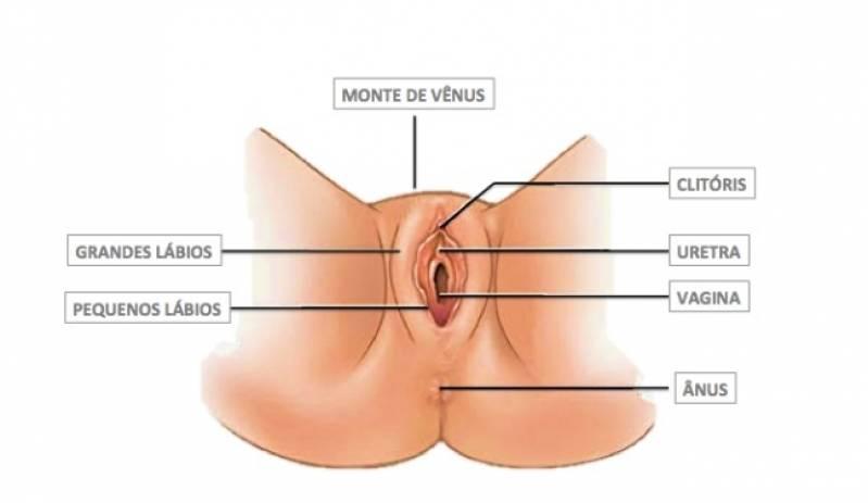 Cirurgia para Lábios Vaginais Cidade Jardim - Cirurgia íntima nos Pequenos Lábios